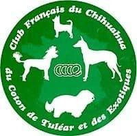Logo du club du Chihuahua