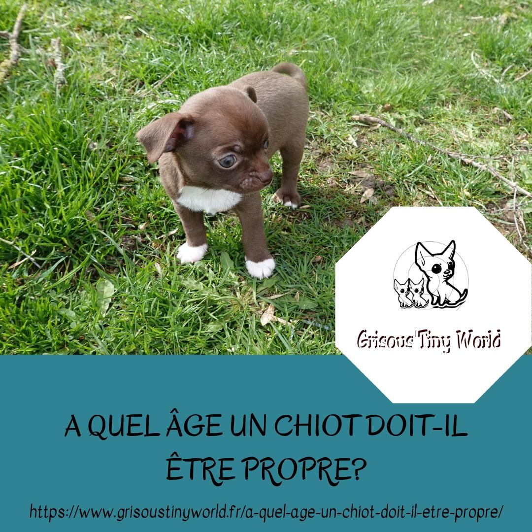 Read more about the article A quel âge un chiot doit-il être propre ?