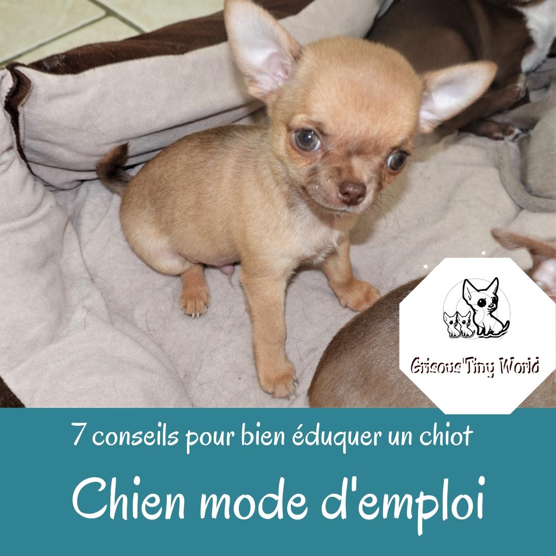 Read more about the article 7 conseils pour bien éduquer un chiot